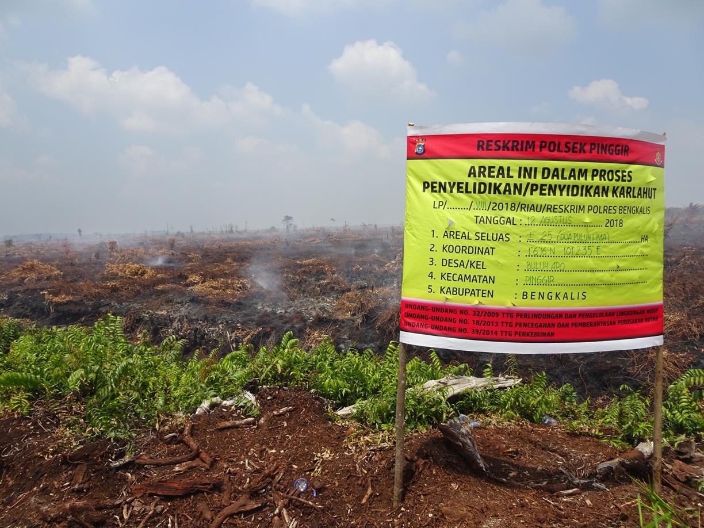 Spanduk dari kepolisian yang menyatakan lokasi kebakaran seluas 25 hektar dalam proses penyidikan Lokasi Kebakaran lahan gambut di konsesi PT RRP yang sudah dicabut izinnya di Desa Buluh Apo pada titik koordinat N1°6'19.79