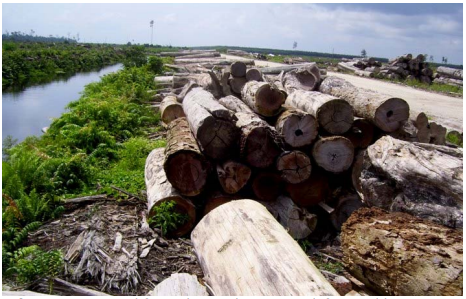 —Natural forest logs in large area deforested by PT BDL.