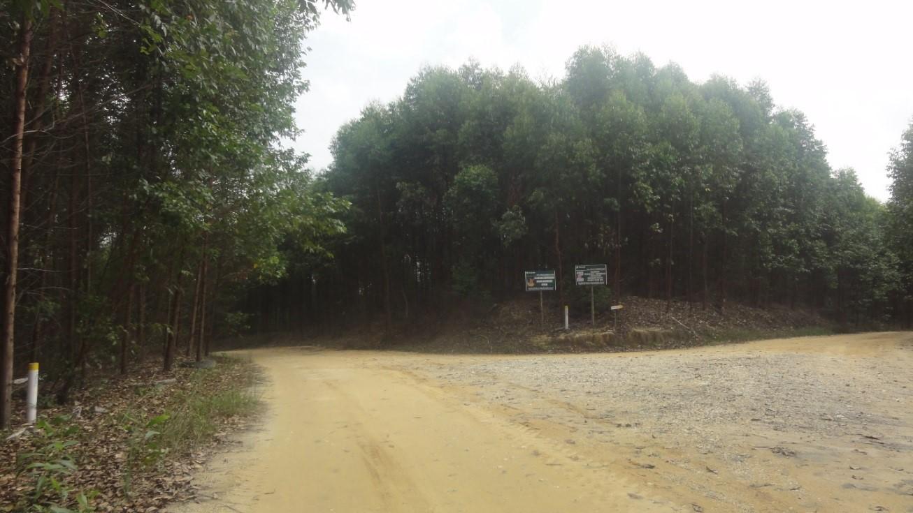Tanaman akasia PT RAPP sektor Ukui berada pada titik Koordinat S0°8'1.09