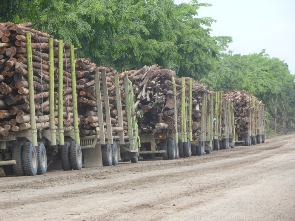 Trucks carrying woods from natural forest clearing heading to APRIL's PT RAPP pulp mill on 1 May 2015.  Photo by EoF. Location:  N 0°28'0.34