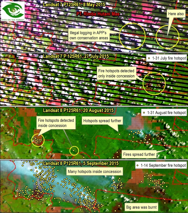 Map 3. Landsat images from May to September and NASA FIRMS fire data seem to suggest that many fires actually started inside PT. Rimba Hutani Mas concession and sometimes spread outside.